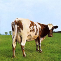 Pink Floyd, Atom Heart Mother